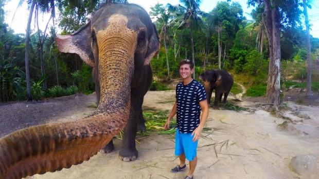 « L'elphie » : histoire d'un éléphant de Thaïlande qui faisait un selfie